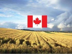 怎么移民加拿大?联邦农业试点项目值得一试