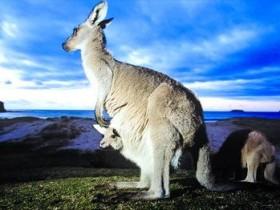 2020澳洲移民EOI打分表打分细则