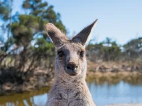 澳洲GTI移民如何申请?申请人成就该怎么证明