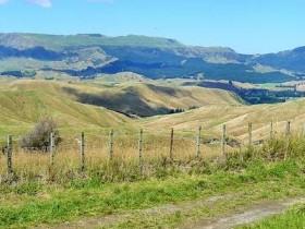 怎样移民新西兰,企业绿色通道移民方式简直太方便了