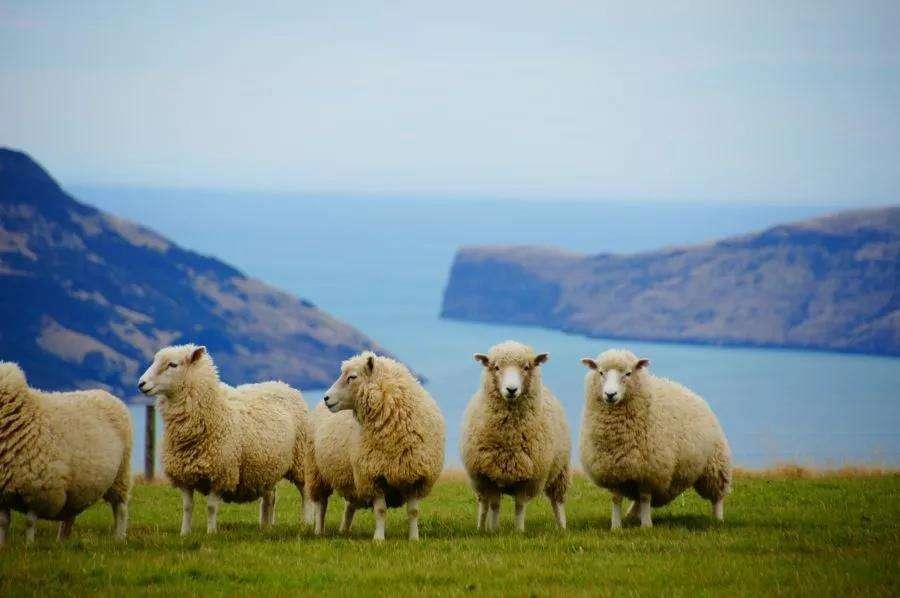 移民新西兰好吗,过来人亲身经历讲述新西兰真实生活!