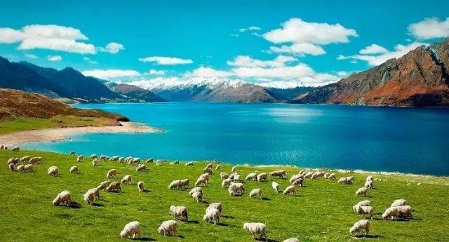 2020年新西兰移民条件是什么,移民新西兰需要多少钱