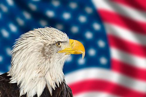 如何申请移民美国?拿美国绿卡的方法有哪些