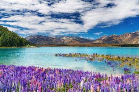 移民新西兰好吗,新西兰移民优势有哪些?