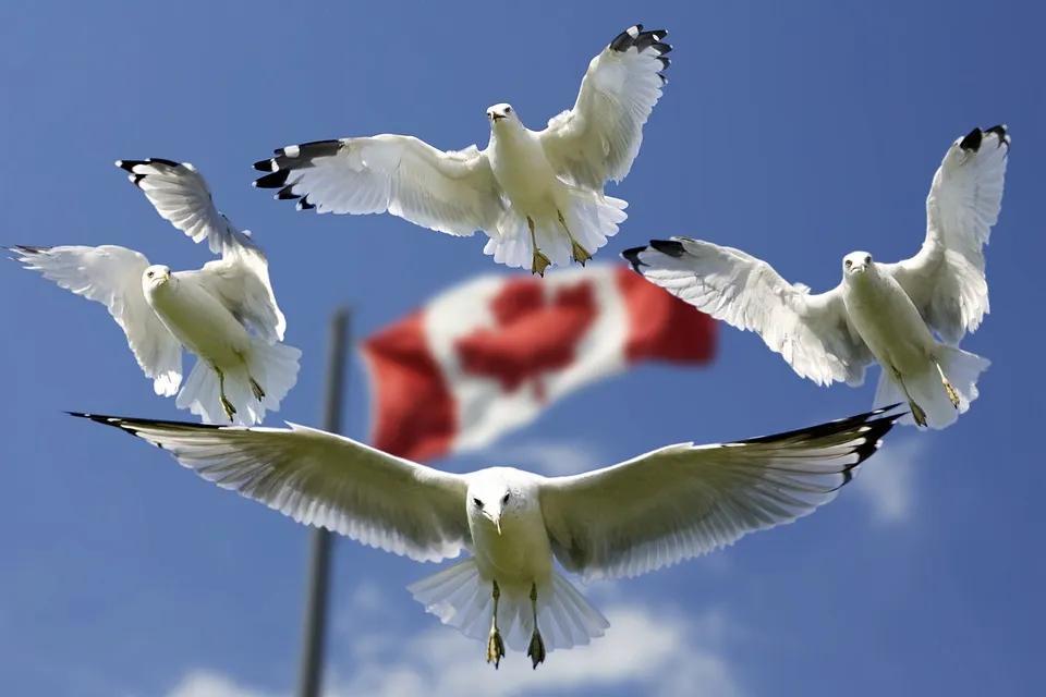 加拿大投资移民多少钱,加拿大投资移民项目费用